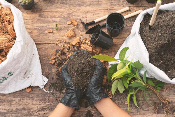 cuidar tu jardín