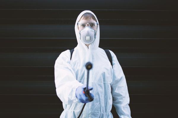 Plagas en edificios: cómo identificarlas y combatirlas